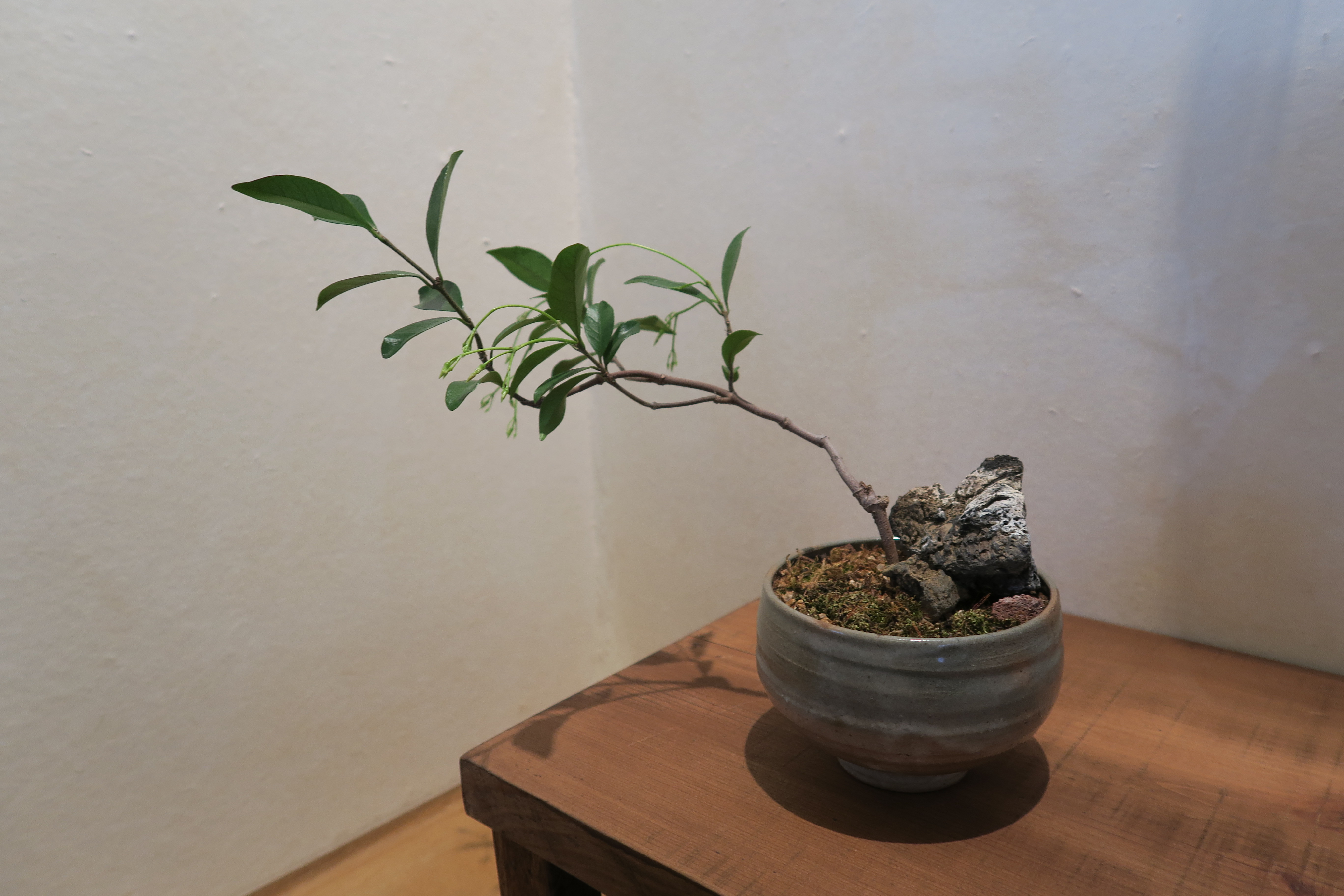 A potted green plant seen at a cafe in Gyeongju, South Korea.